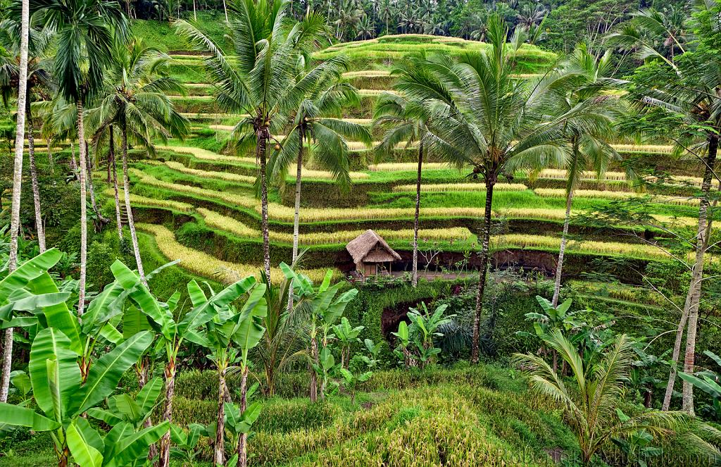 seab18 tegallantang rice terraces ubud bali slides img