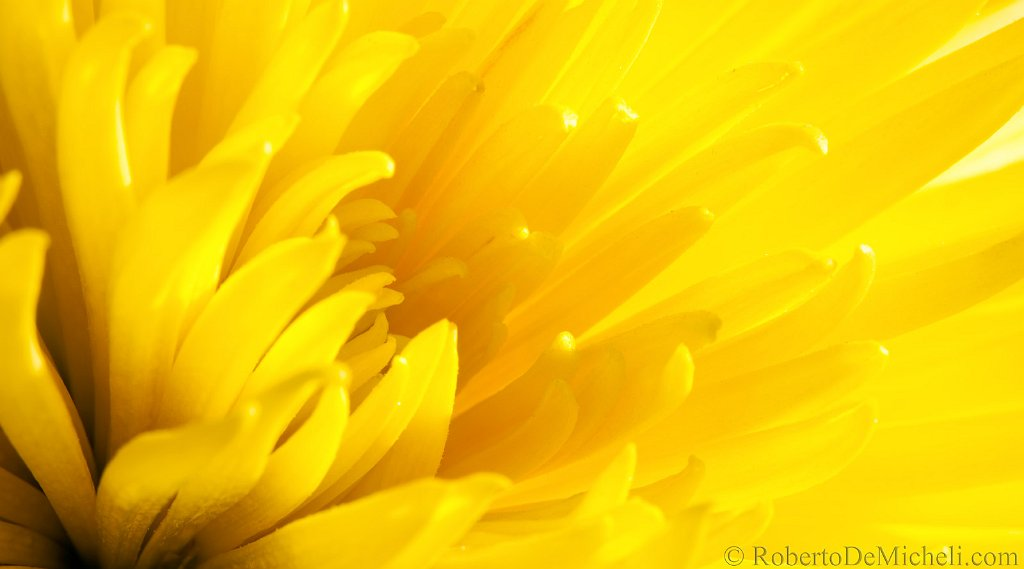 Mf73 yellow flower detail slidesimg6424fg slidesimg6424fg flower petal macro colour color yellow mightylinksfo