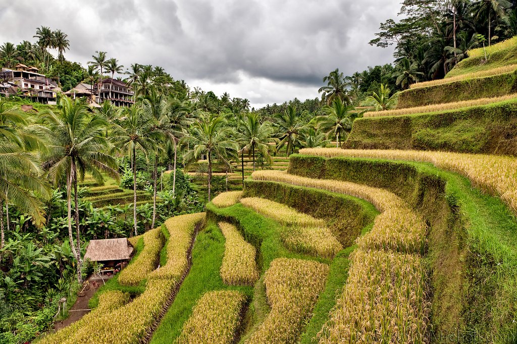 Seab20 tegallantang rice terraces ubud bali slides img for What are terraces
